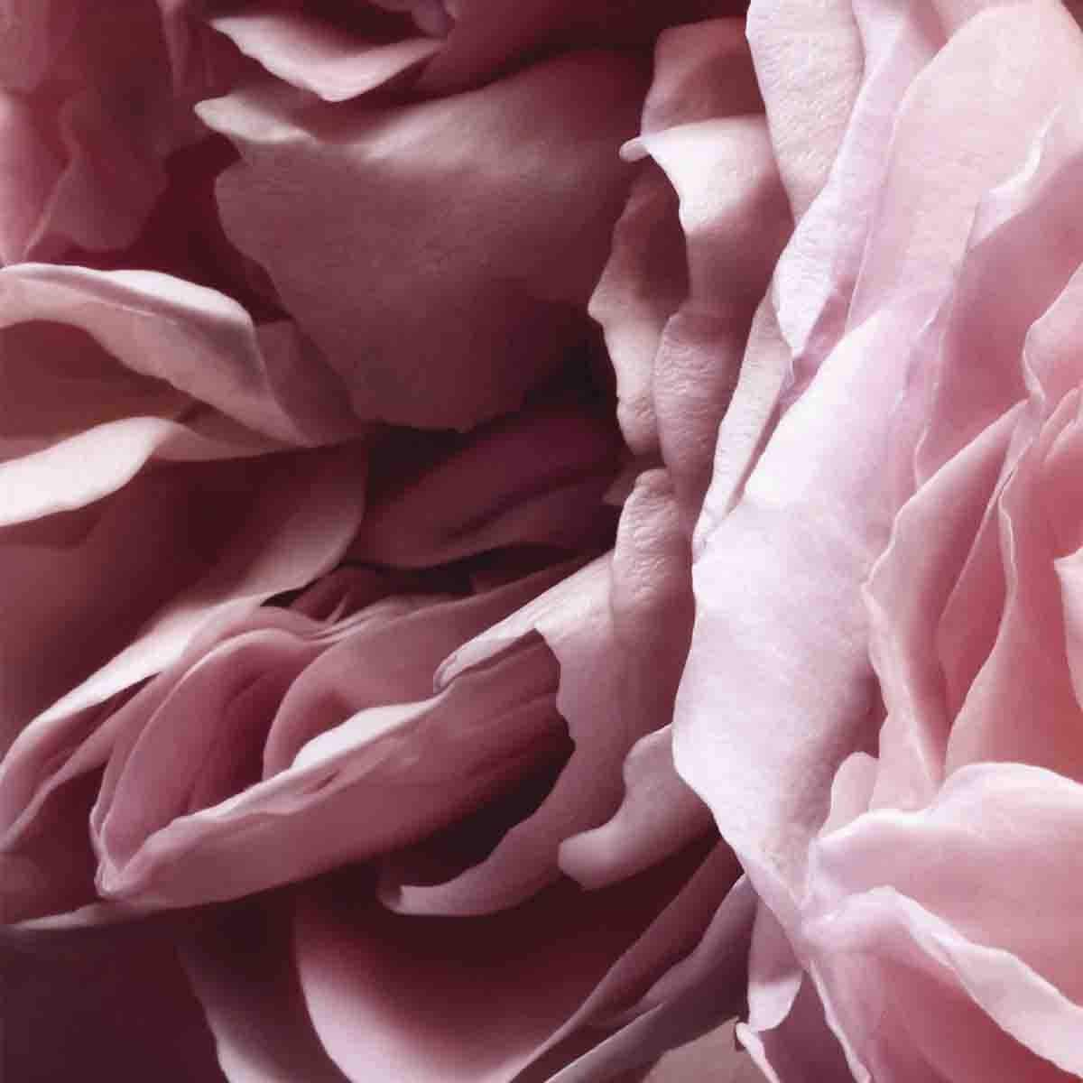 Fragancia para Dama, Nina Ricci L'extase Edp 80Ml