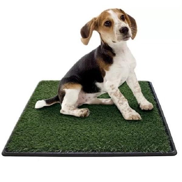 Tapete Sanitario para perro Green Carpet Mediano