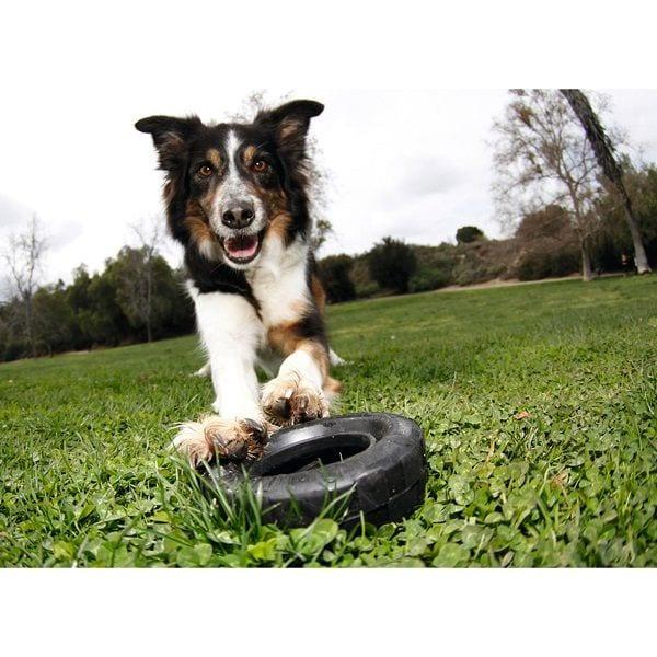 Juguete Perro Llanta Grande Tires Large Mascota Kong