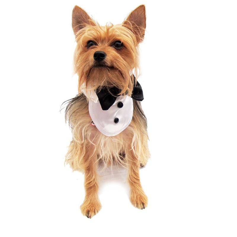 Pechera Personalidad Pet Pals Boutique