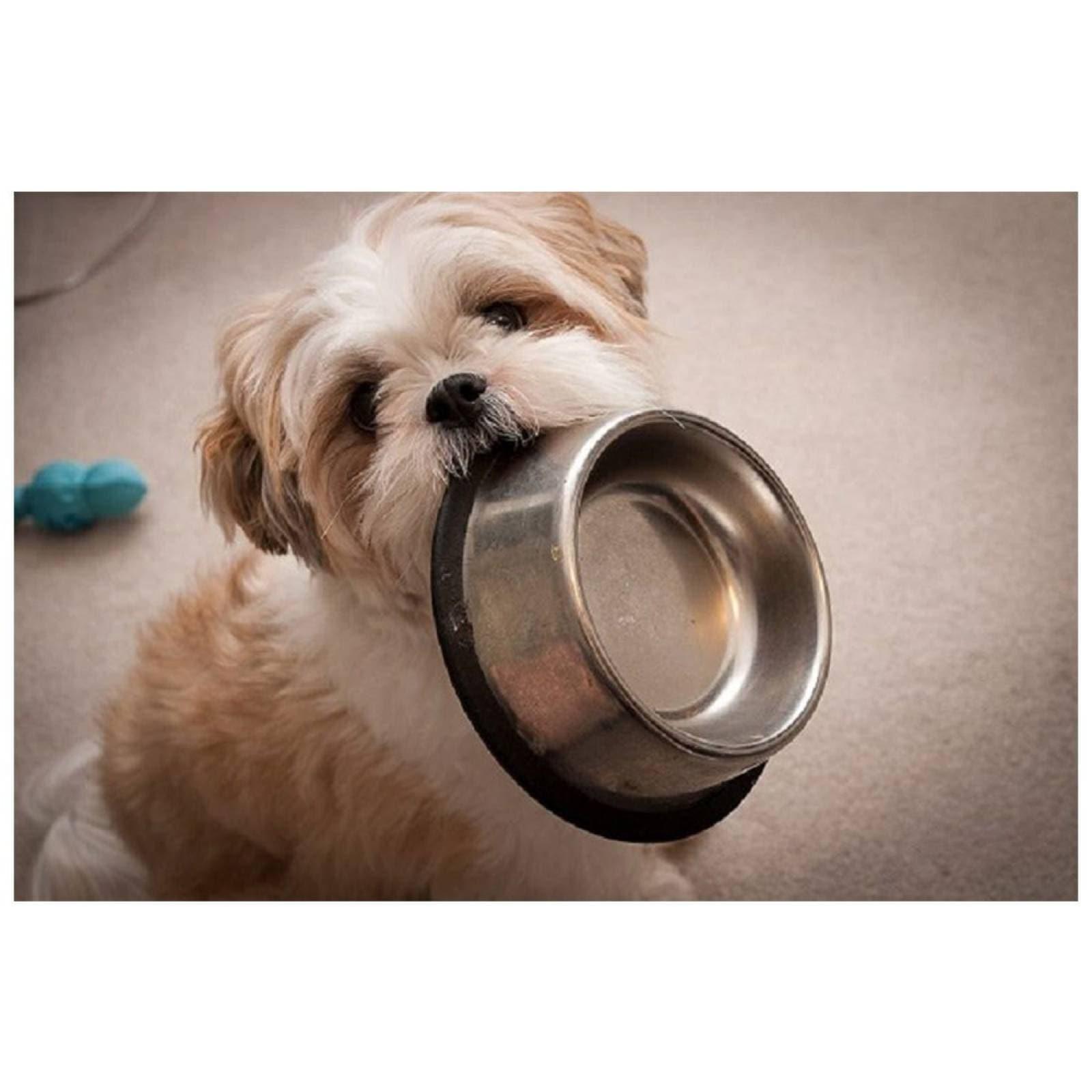 Croquetas Royal Canin 451510 Alimento BHN Shih Tzu 4.54kg
