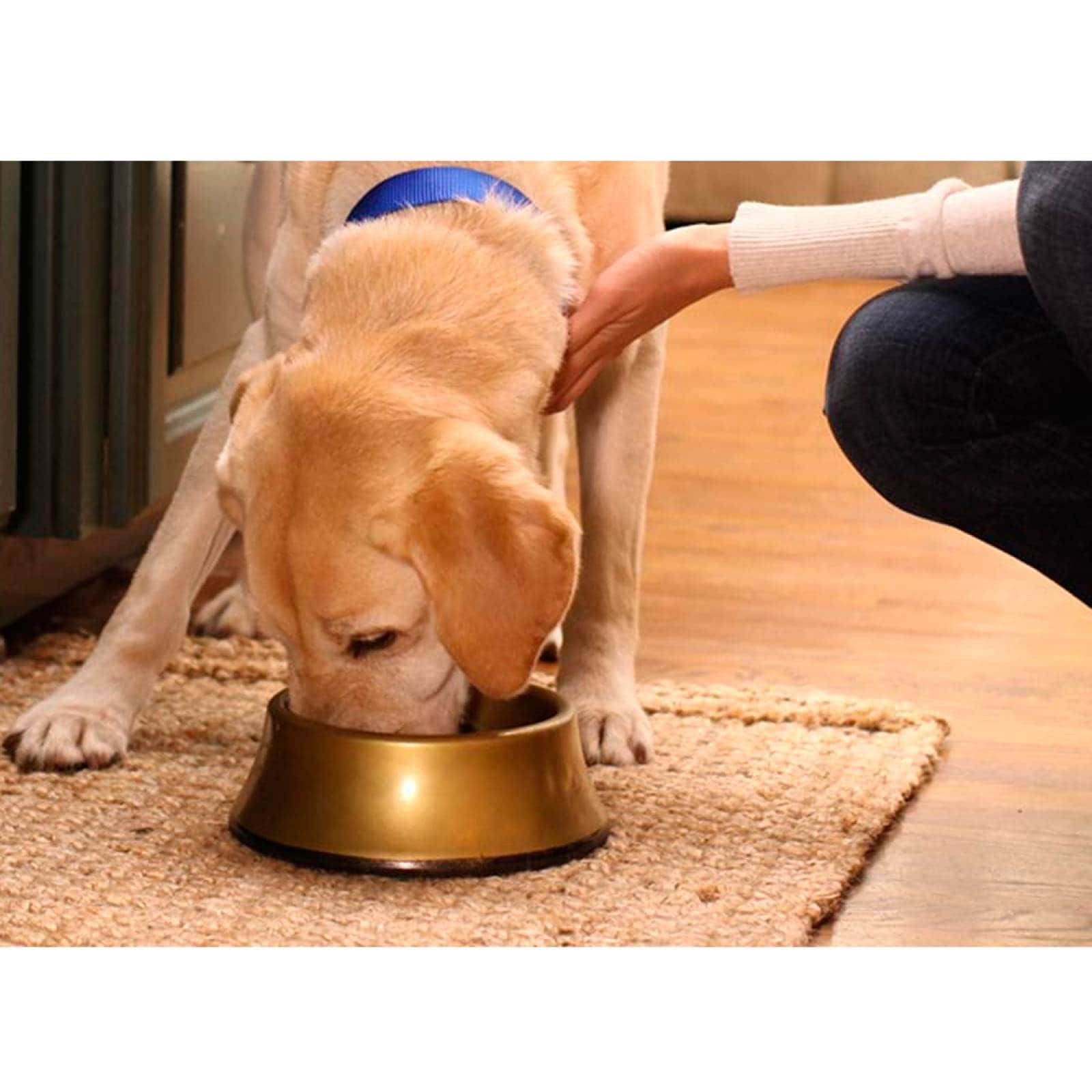 Alimento Perro Croquetas Cachorro Sabor Pollo 7 kg Hills